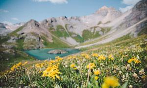 在山上开出鲜花的自然风光高清图片