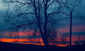 黄昏晚霞萧瑟大树风光摄影高清图片