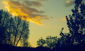 树木与空中的云彩风光摄影高清图片