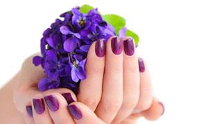 捧着紫色花的手势特写摄影高清图片