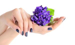 托在手心上的花朵特写摄影高清图片
