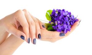 呵护着蓝色花的手特写摄影高清图片