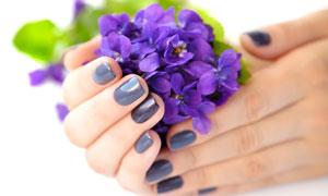 呵护着蓝色小花的双手摄影高清图片