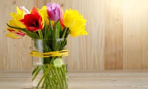 玻璃瓶多彩郁金香插花攝影高清圖片
