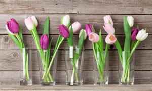 不同外形的花瓶郁金香插花高清圖片