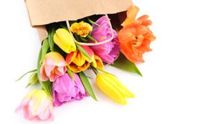 包裝紙袋里的郁金香花攝影高清圖片