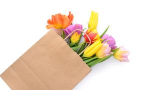 裝在紙袋里的郁金香花攝影高清圖片