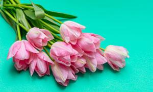 綠色背景上的郁金香花攝影高清圖片