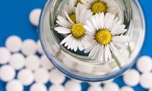 玻璃罐里的白菊花特寫攝影高清圖片