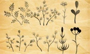 水彩植物裝飾PS筆刷