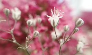 春天來了慢慢綻放的花攝影高清圖片
