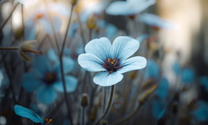 花草叢中的一朵花特寫攝影高清圖片