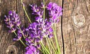 在木板上的紫色薰衣草攝影高清圖片