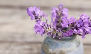 瓶子里开花的薰衣草花摄影高清图片