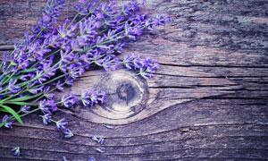 木板之上的薰衣草特写摄影高清图片