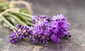 一束开花的薰衣草特写摄影高清图片