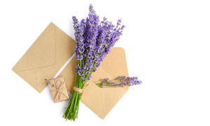 禮物盒信封與一束薰衣草等高清圖片