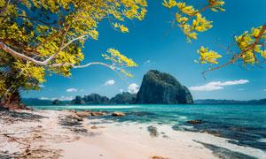 树木海景与海岸山石等风景摄影图片