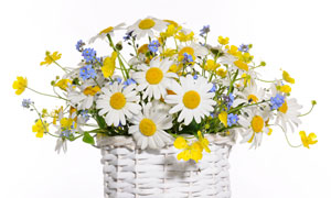 在编织篮里的鲜艳花束摄影高清图片