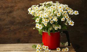 一大束小菊花花束特写摄影高清图片