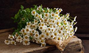 木板上的菊花花束特写摄影高清图片