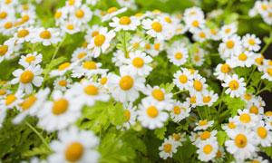 公園里的一大片花草叢攝影高清圖片