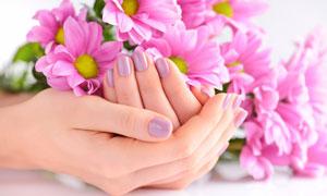 手中的幾朵粉紅色花朵攝影高清圖片