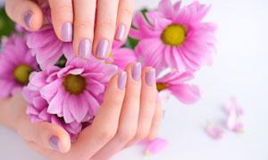 呵護在手里的花朵特寫攝影高清圖片