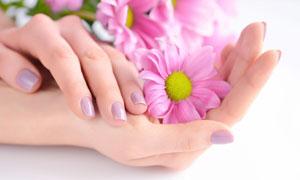 手掌中的一朵花瓣特寫攝影高清圖片