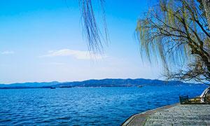 春季西湖湖边柳树景观摄影图片
