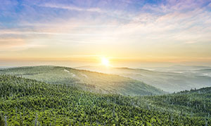 清晨山頂美麗的森林攝影圖片