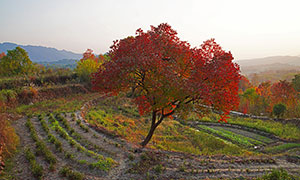 塔山村田園樹木景觀攝影圖片