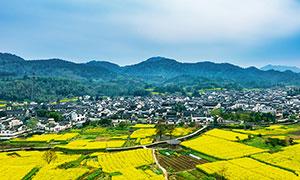 黟縣西遞鎮村莊和油菜花攝影圖片