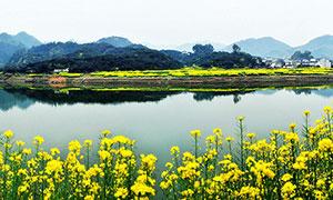 新安江山水畫廊全景圖攝影圖片