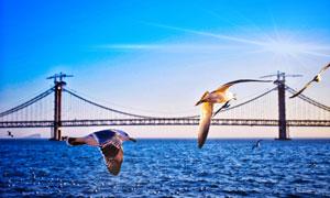 跨海大桥与海面之上的海鸥高清图片