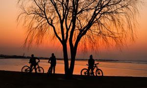 天边晚霞映衬下的大树剪影高清图片
