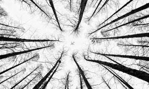 凋零树木与空中的飞机摄影高清图片