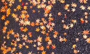 落滿了樹葉的鋪石子路攝影高清圖片