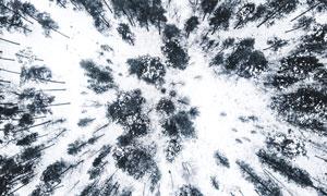 白雪中的树林航拍视角摄影高清图片
