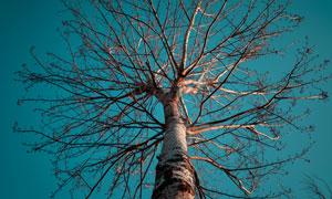 仰视角度拍摄的参天树主题高清图片
