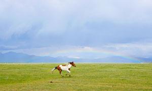 辽阔草原上驰骋的骏马摄影高清图片