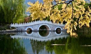 公园湖畔小桥树木风光摄影高清图片
