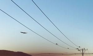 高壓電線上停留的小鳥攝影高清圖片