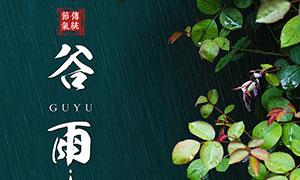 谷雨传统节气宣传海报设计PSD源文件