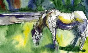 在低頭吃草的馬匹水彩繪畫高清圖片