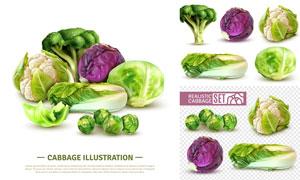 质感效果白菜与甘蓝菜主题矢量素材