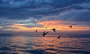 傍晚海上美景和海鸥摄影图片