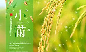 中国传统小满节气海报设计PSD分层素材