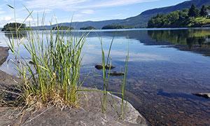 清澈的湖泊和草丛摄影图片