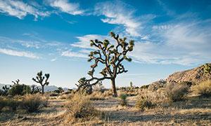 沙漠中的树木景观摄影图片